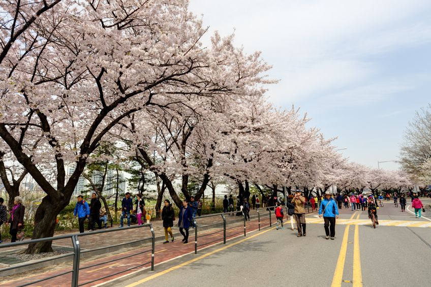 seoul-spring