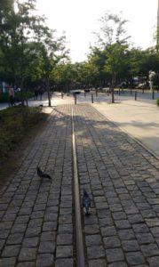 forest-park-street